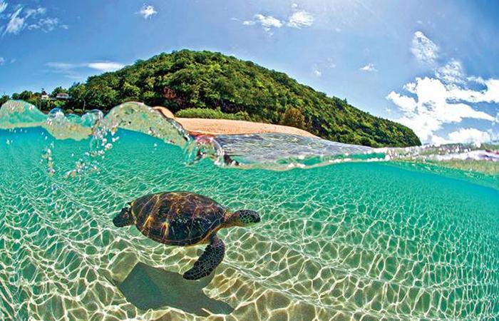 ハワイ税金所得税